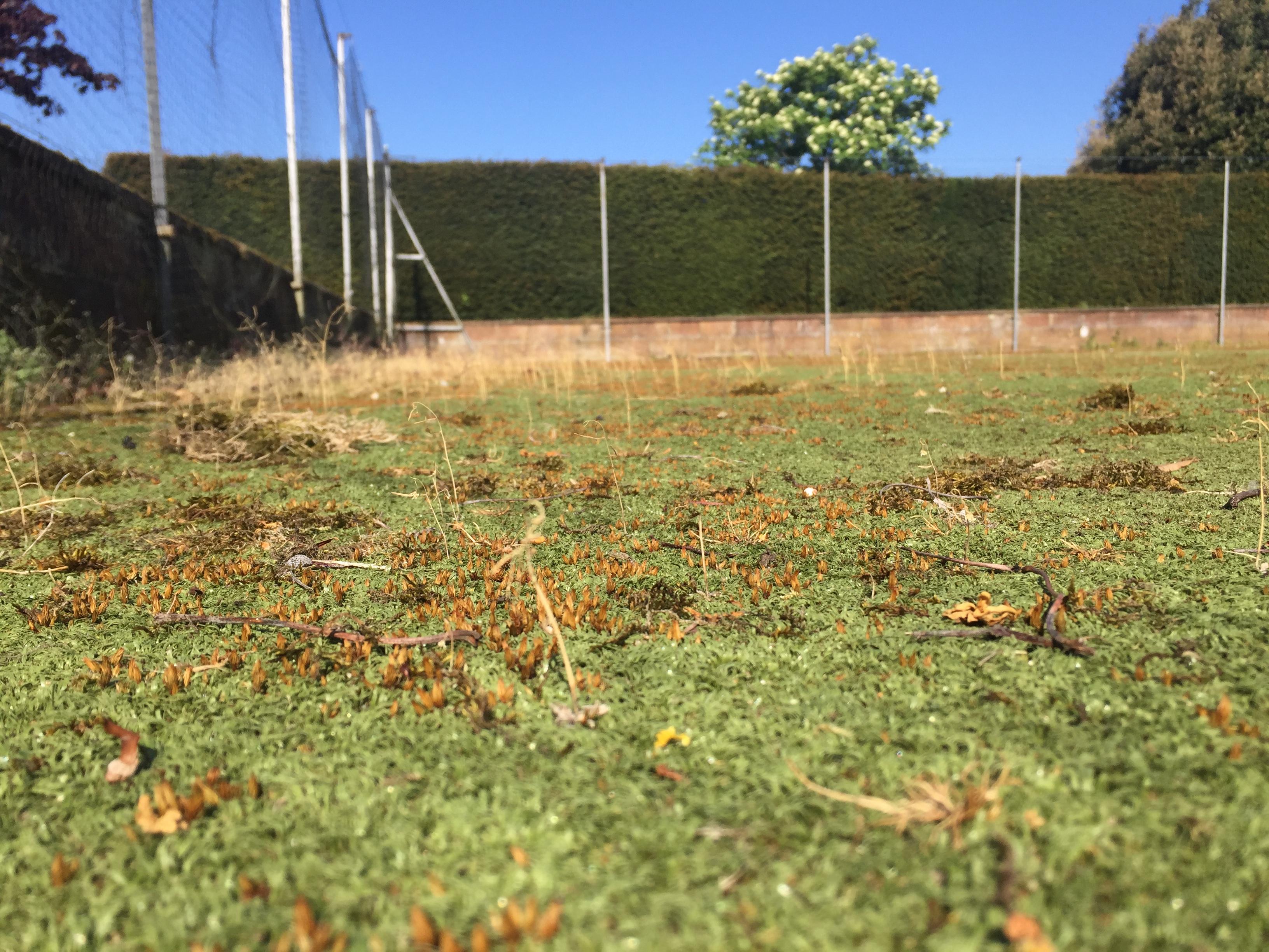 Tennis Courts Maintenance Moss Problems